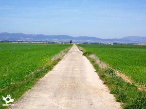 [:es]Ruta cicloturista entre viñas[:eu]Mahastien arteko bizikleta martxa[:] @ Haro, La Rioja